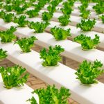 Food Safety Modernization Act (FSMA) – Final Rule for Preventive Controls for Human Food