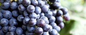 Sirocco Food Wine Consulting Sensory Testing Training WineBG