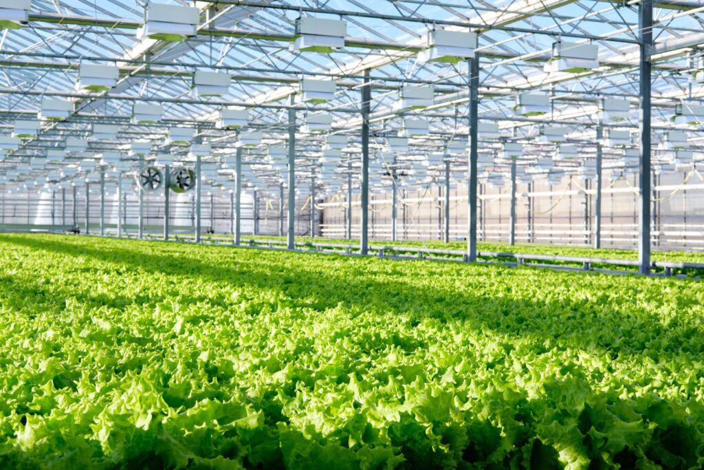 Lettuce growing safely with food traceability